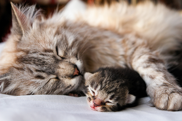 Genetic Reproductive Abnormalities in Cats