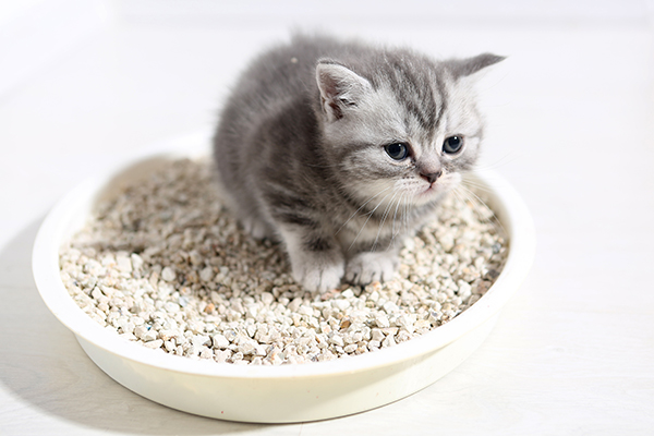Glucose in the Urine in Cats