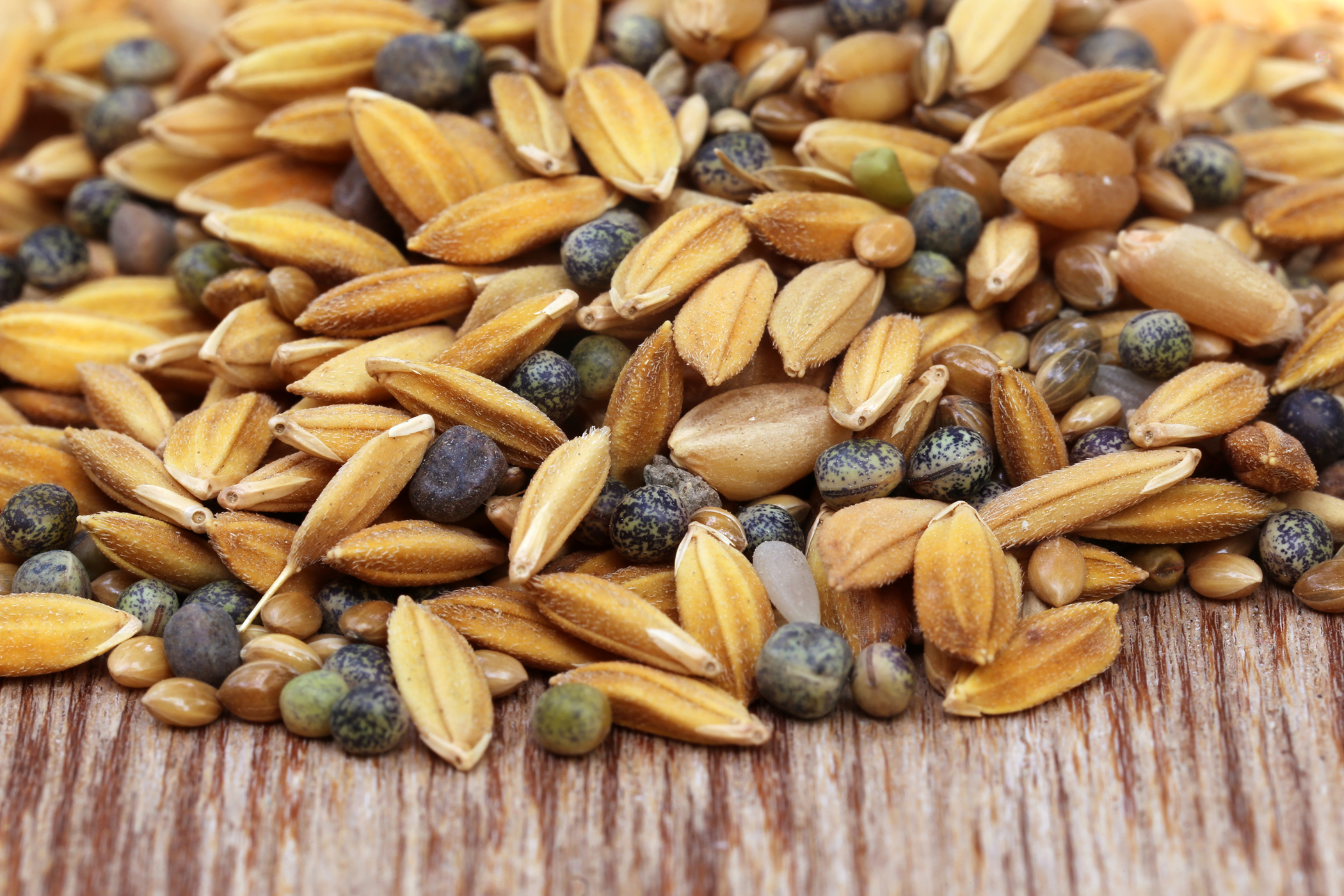 Grain Free Food Allergy in Cats