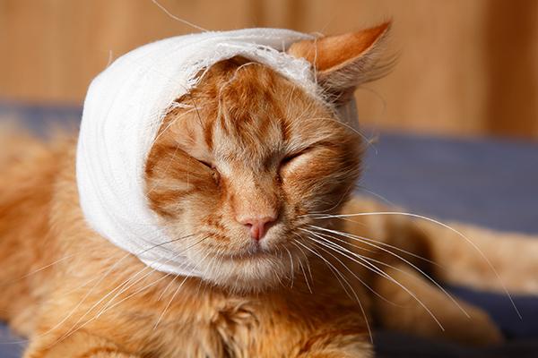 Head Trauma in Cats