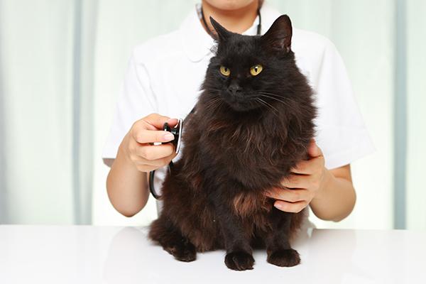 Heart Tumors in Cats