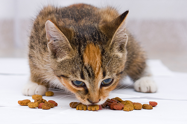 High Cholesterol in Cats