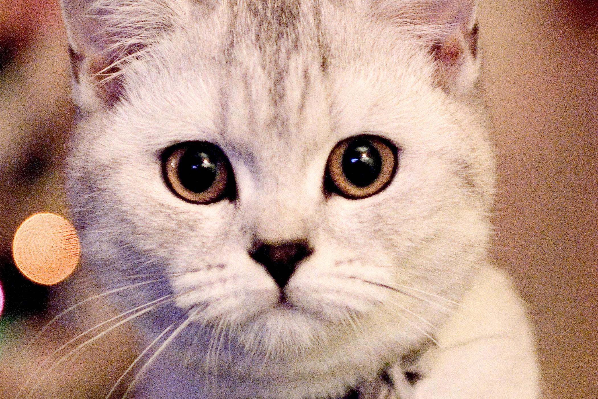 Hyperkinesis in Cats