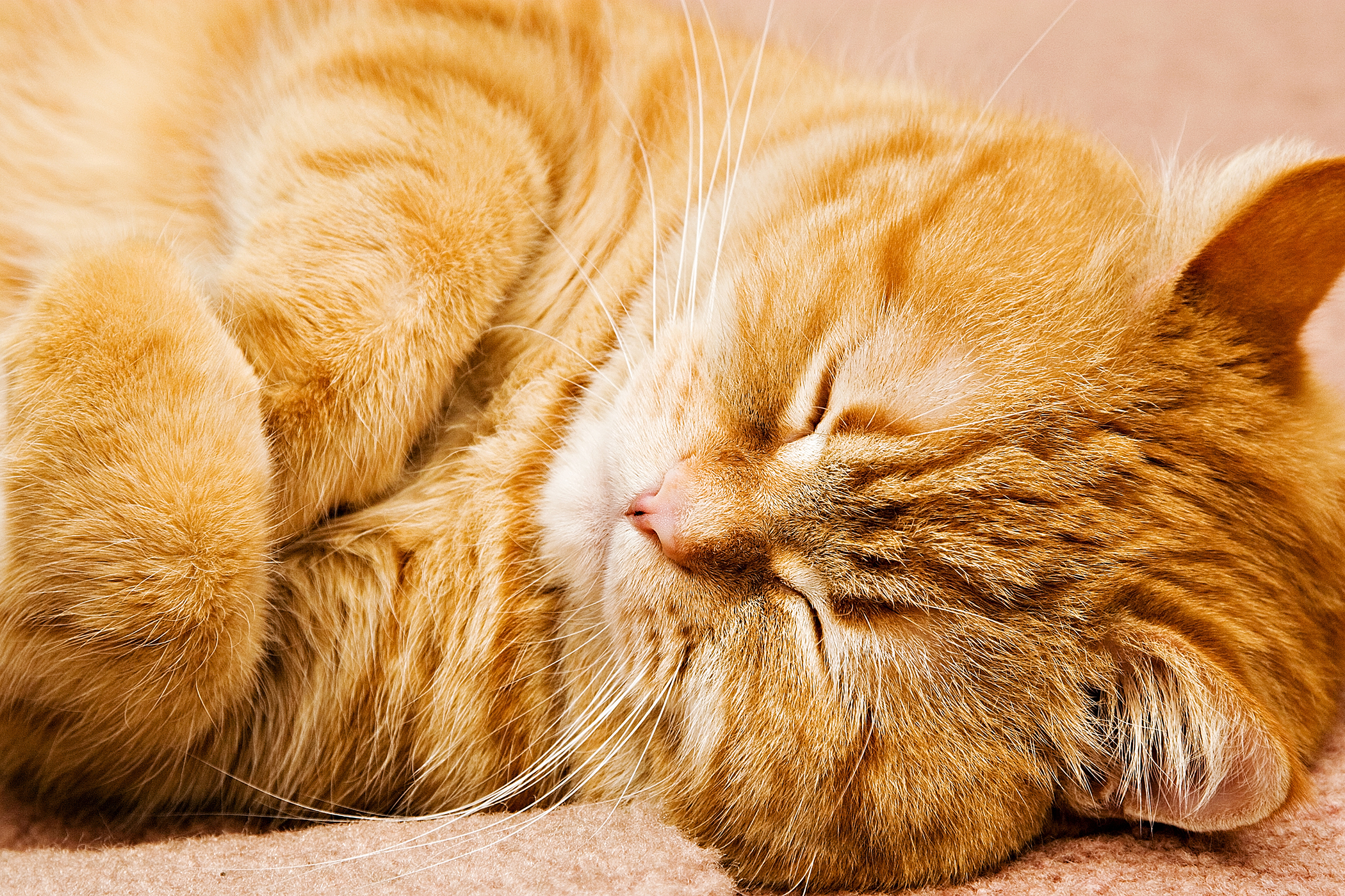 Iams Allergy in Cats