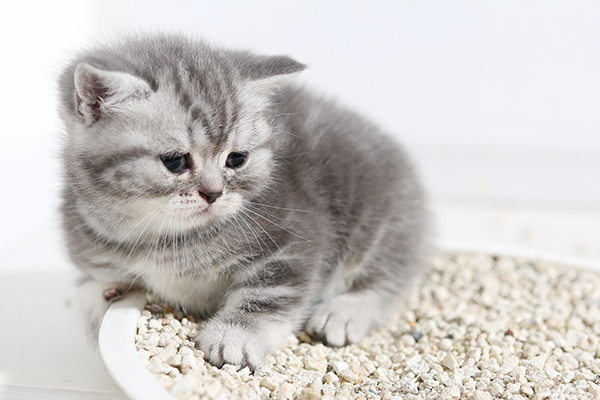Insufficient Urine Production in Cats