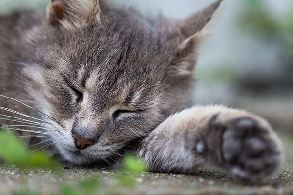Irregular Heartbeat in Cats