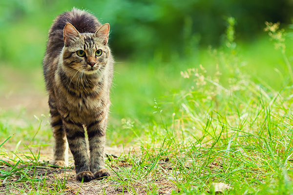 Joint Disorders in Cats