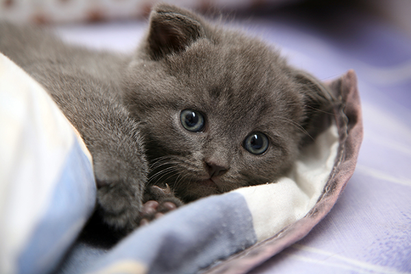 Lack of Bladder Control in Cats