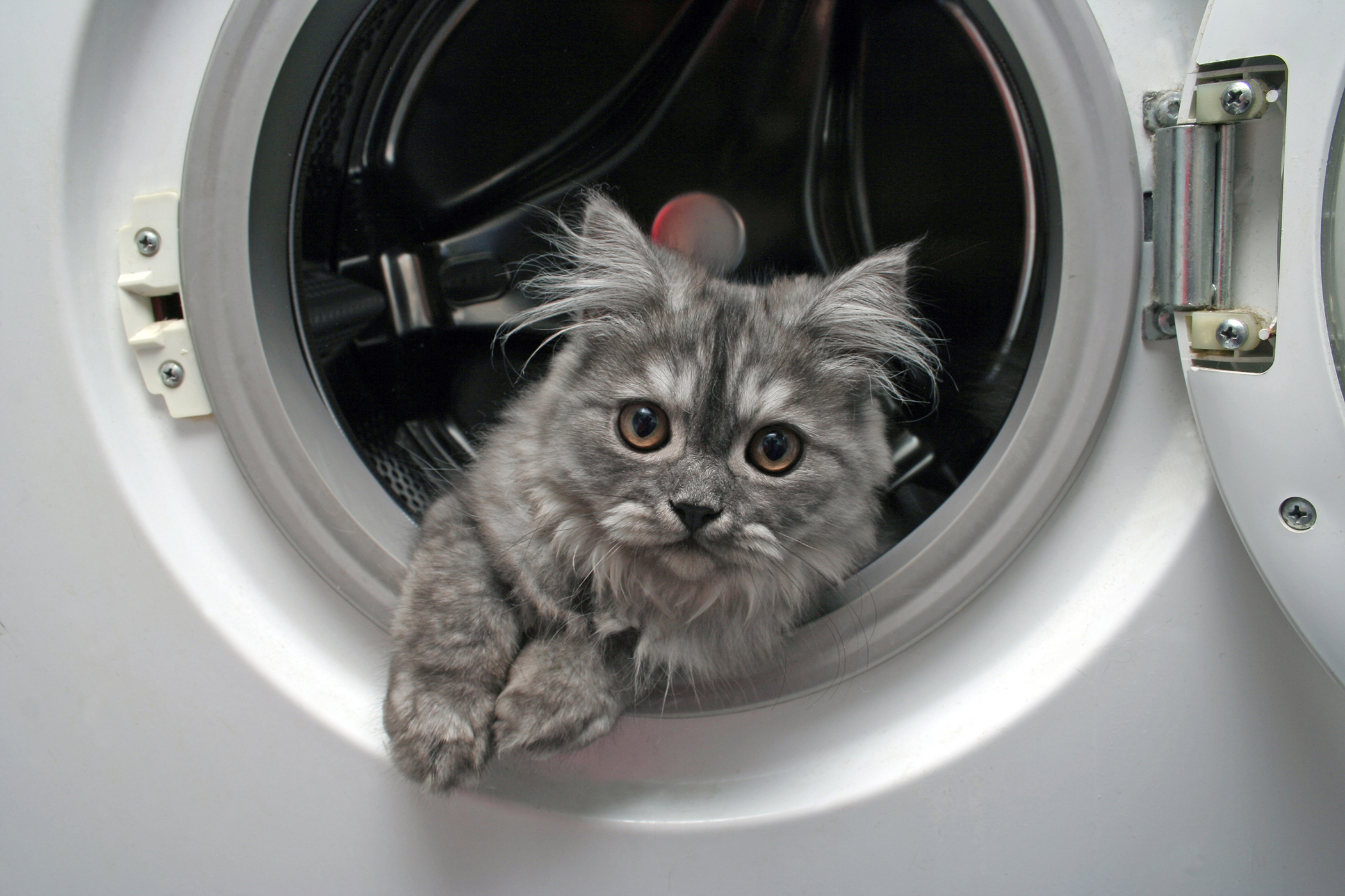 Laundry Detergent Allergy in Cats