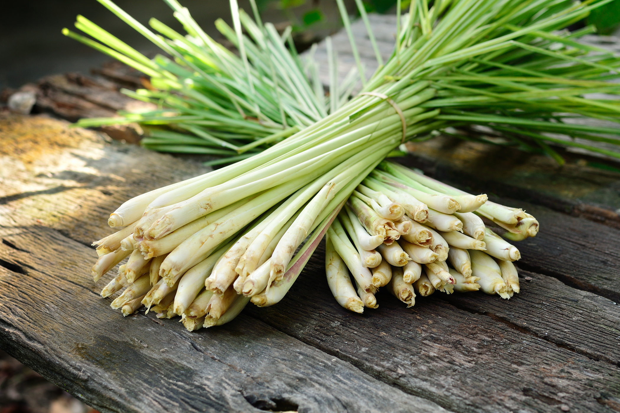 Lemongrass Poisoning in Cats - Symptoms, Causes, Diagnosis, Treatment, Recovery, Management, Cost