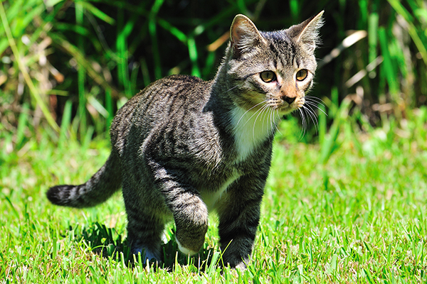 Liver Fluke Infestation in Cats - Symptoms, Causes, Diagnosis, Treatment, Recovery, Management, Cost