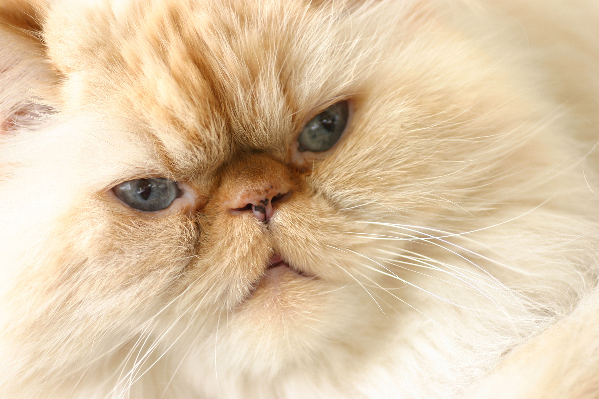 Liver Related Clotting Deficiencies in Cats