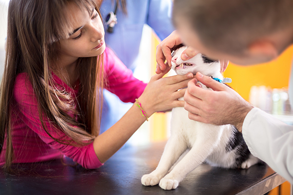 Lymph Node Inflammation in Cats