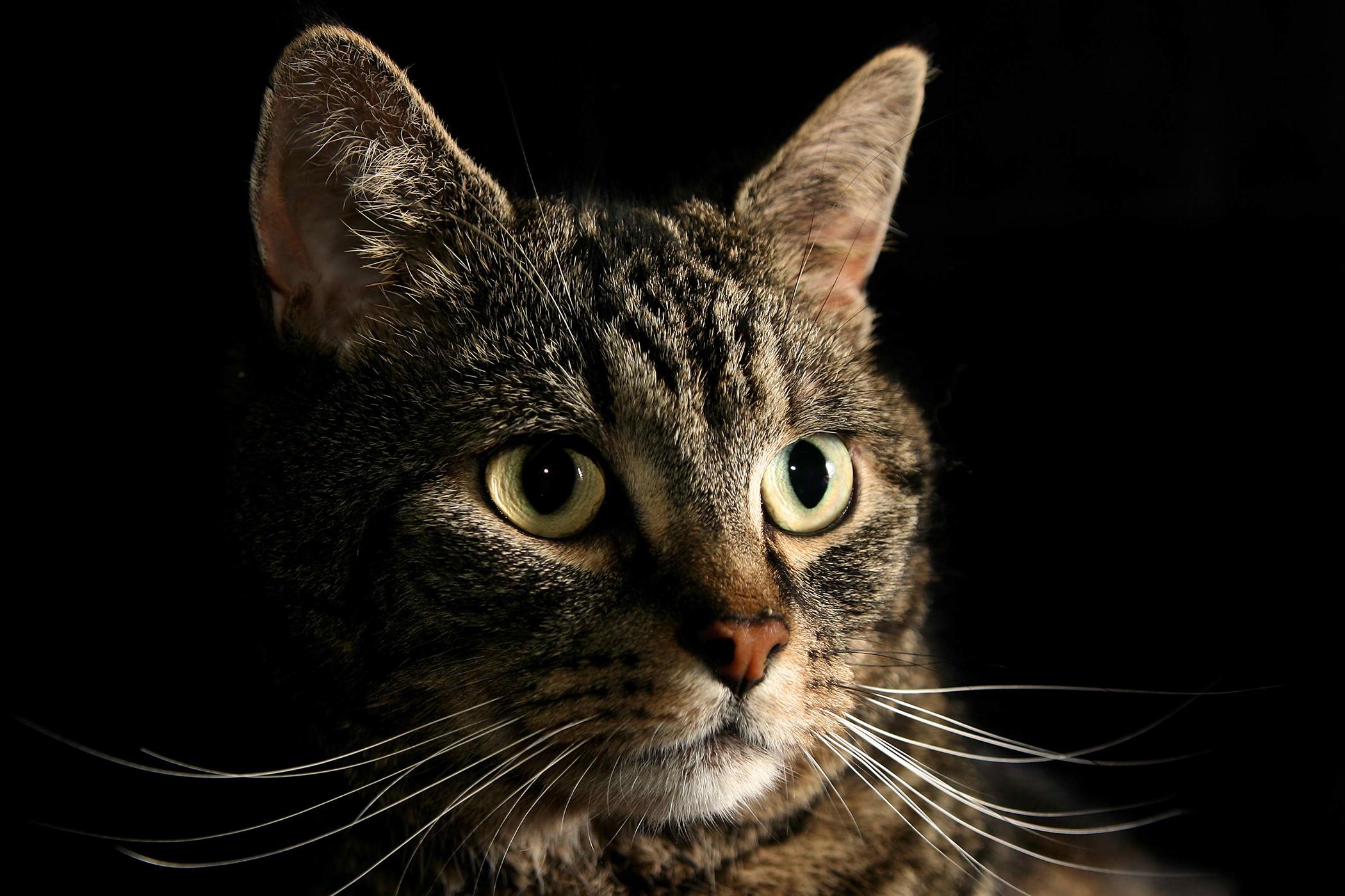 Magnesium Deficiency in Cats