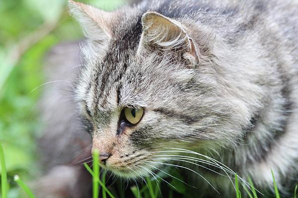 Feline bacterial overgrowth