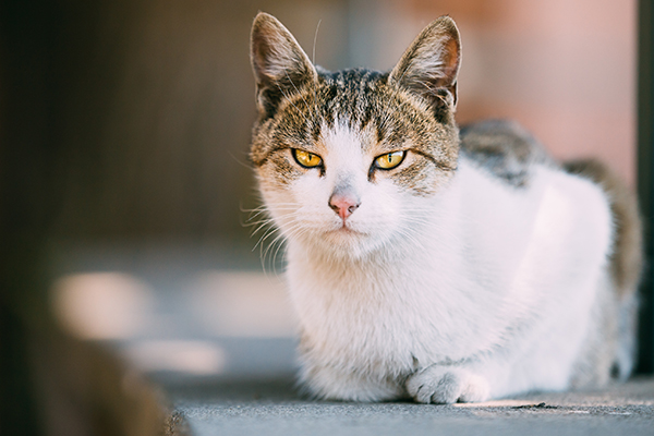 Metabolic Enzyme Deficiency in Cats