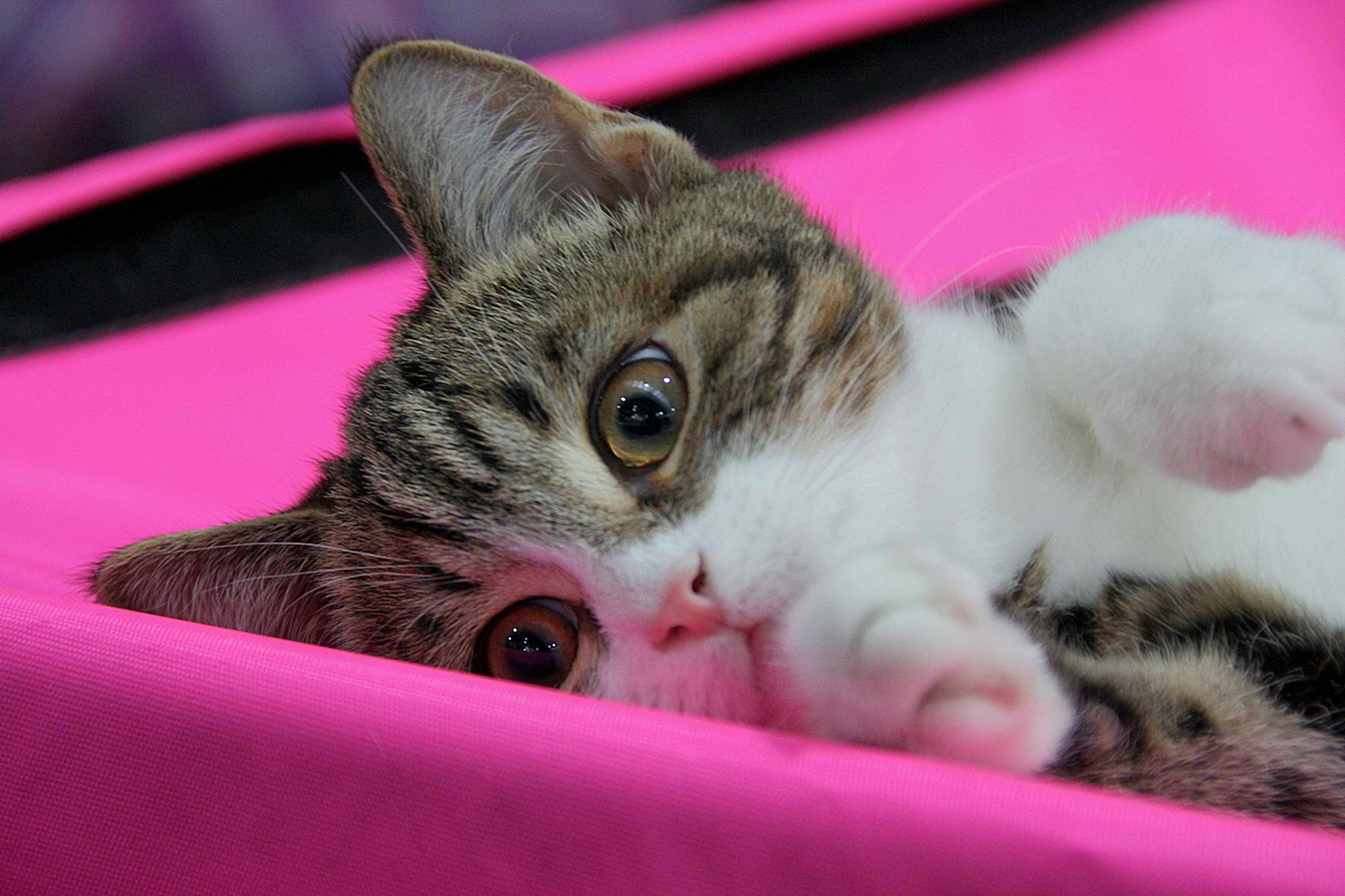 Multiple Organ Dysfunction Syndrome in Cats
