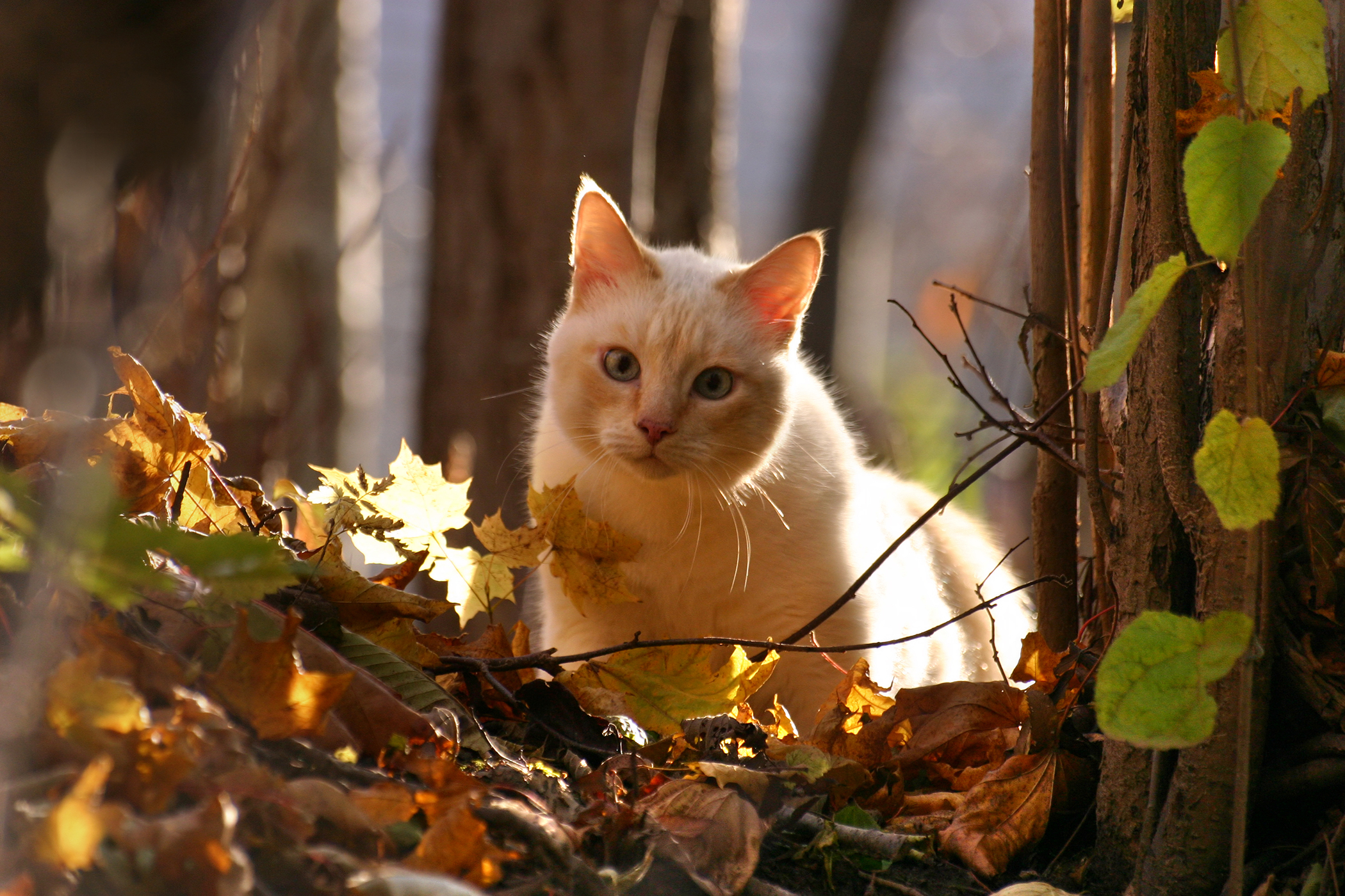 Natural Balance Allergy in Cats