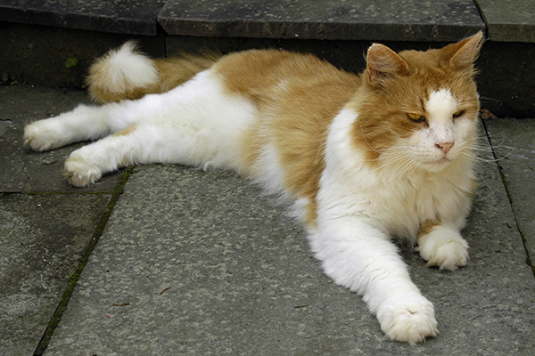 Nerve Disorder in Cats