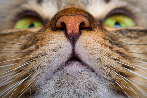Noisy Breathing in Cats