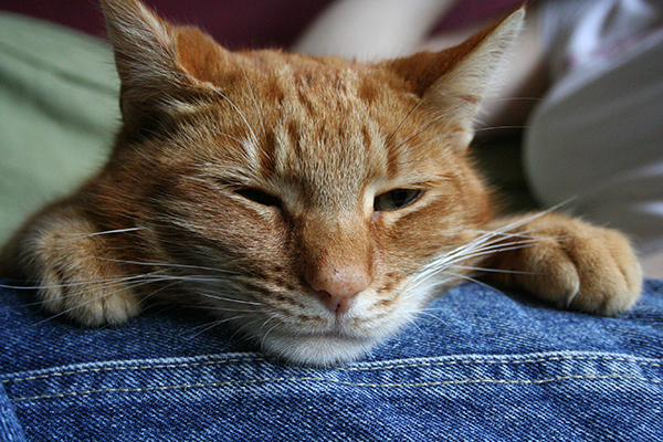 Out-of-Place Urethral Lining in Cats