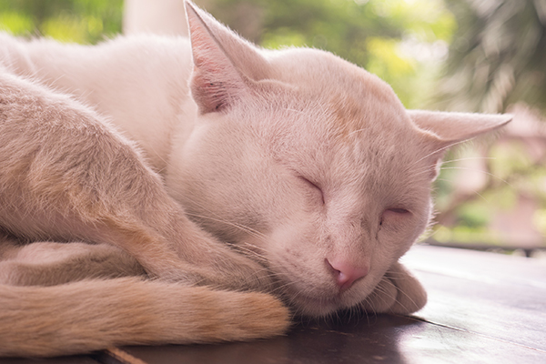 Pain From the Nervous System in Cats