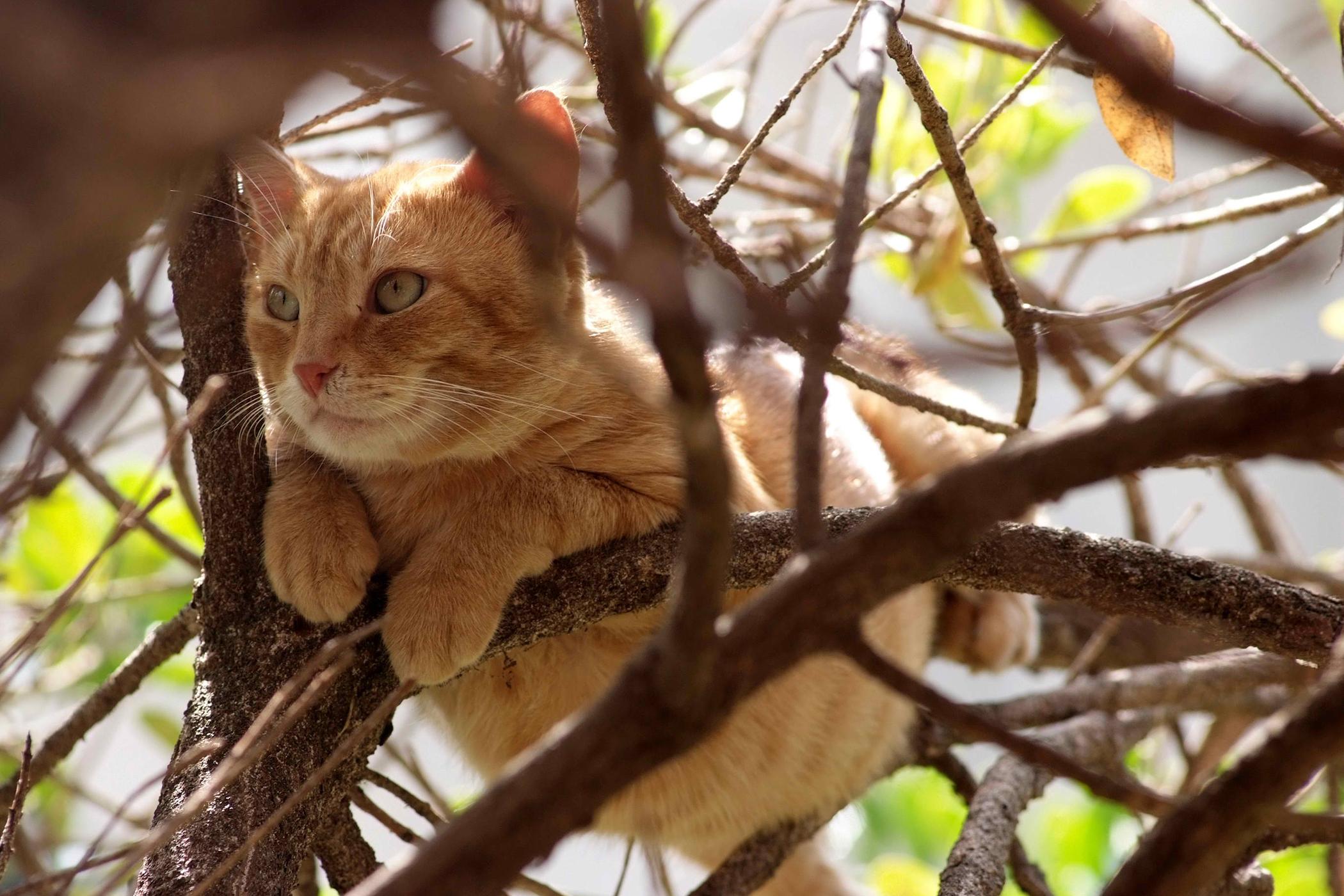 Pancreatic Exocrine Tumors in Cats