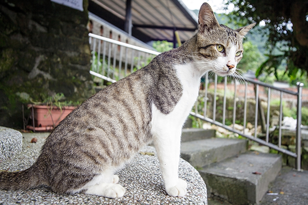 Whipworm infections cats treatment