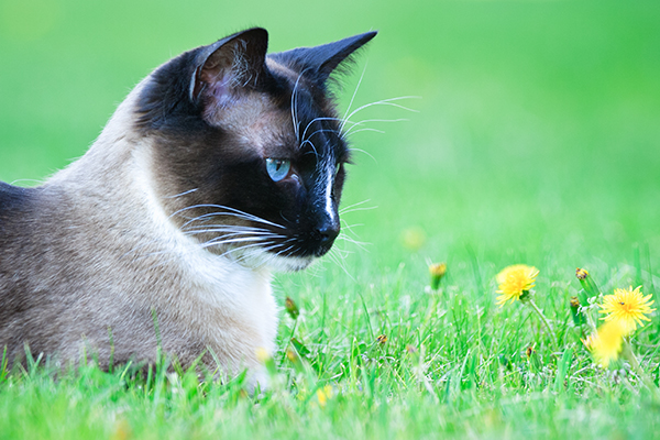 Parasitic Stomach Worm Infection in Cats