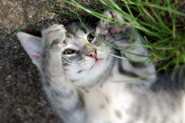Pediatric Behavior Problems in Cats