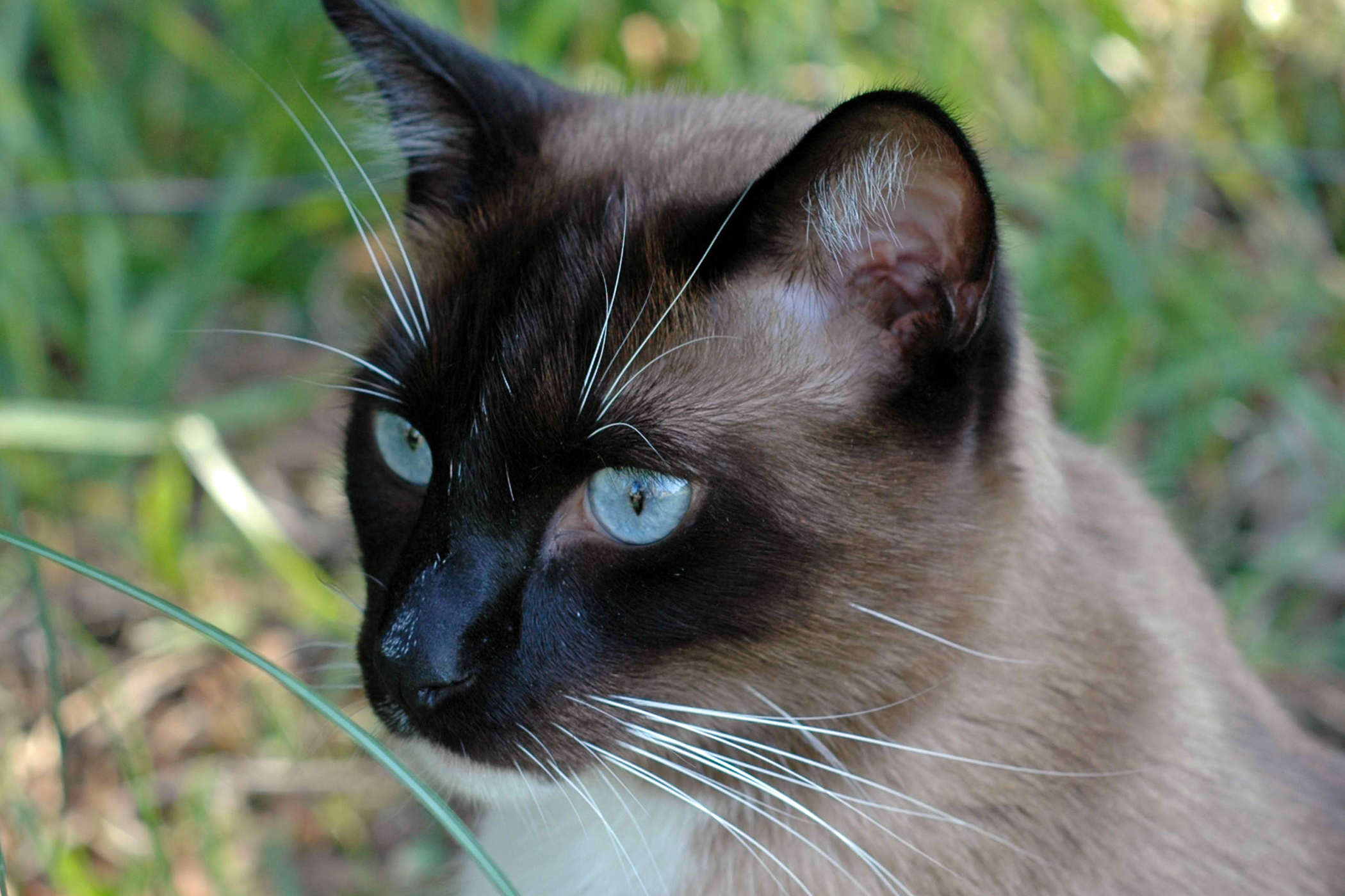 Polyneuropathy in Cats