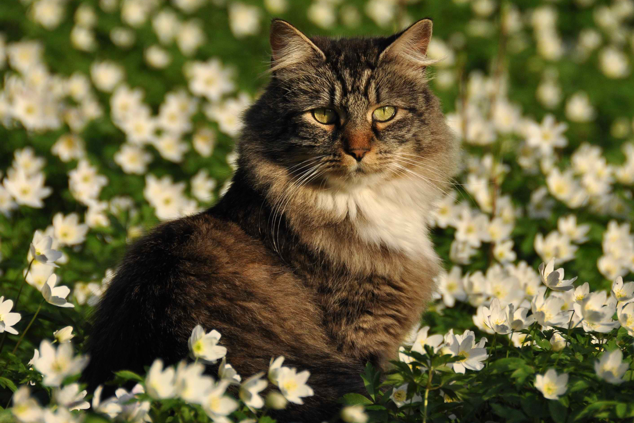 Progressive Retinal Degeneration in Cats