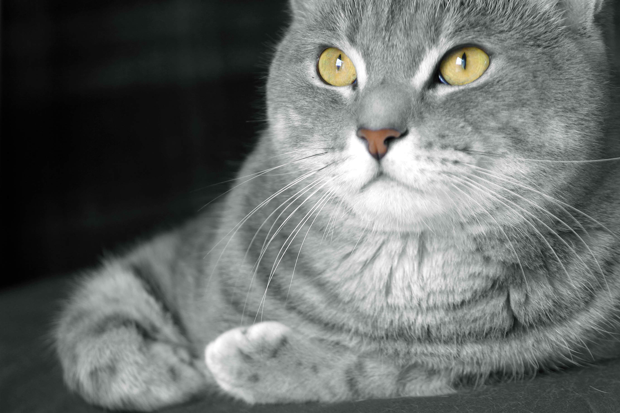 Prostate Enlargement in Cats