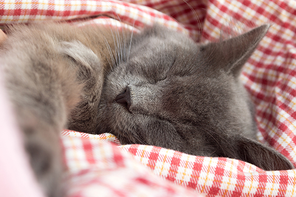 Pus in the Chest Cavity in Cats