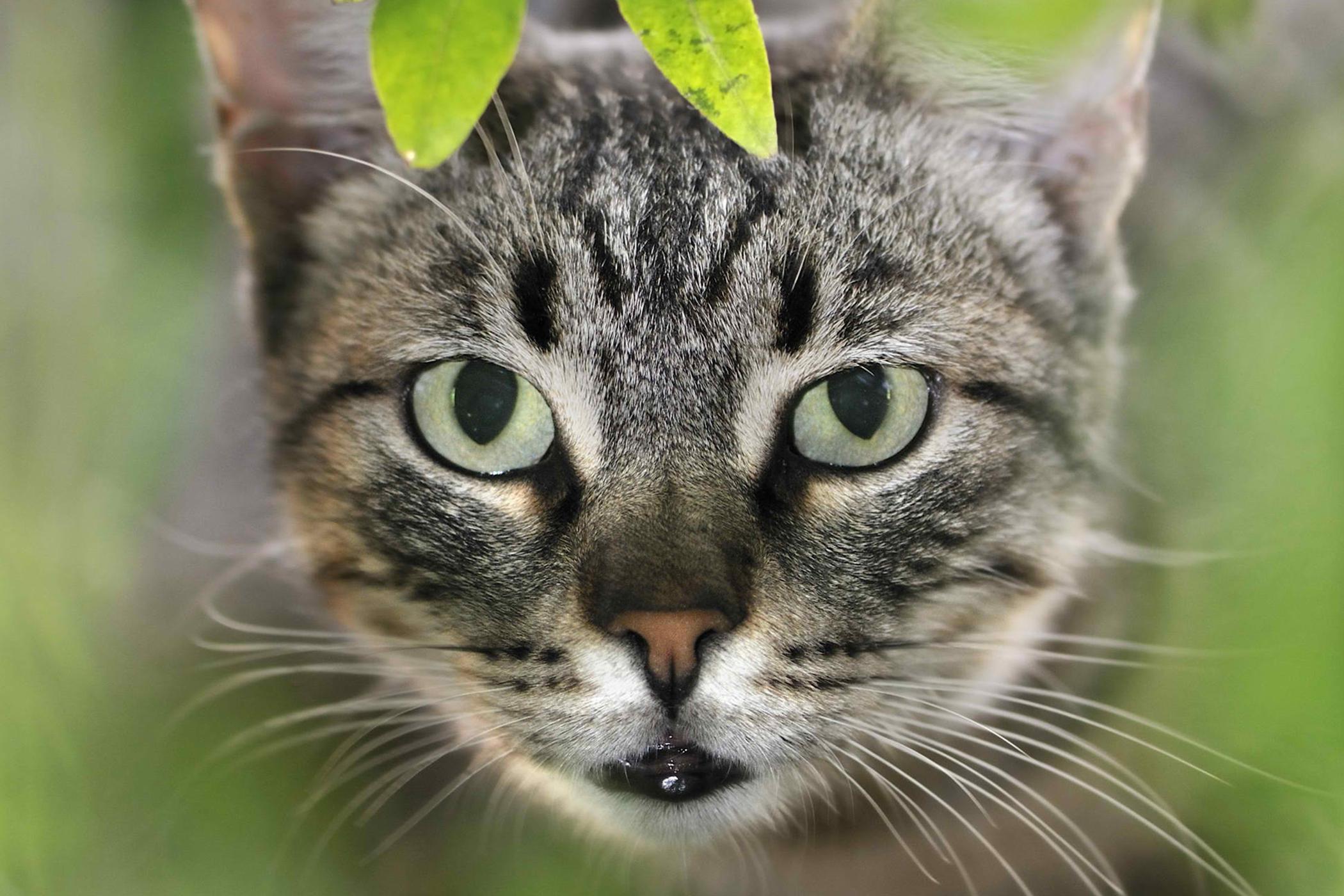 best cat litter box in the world