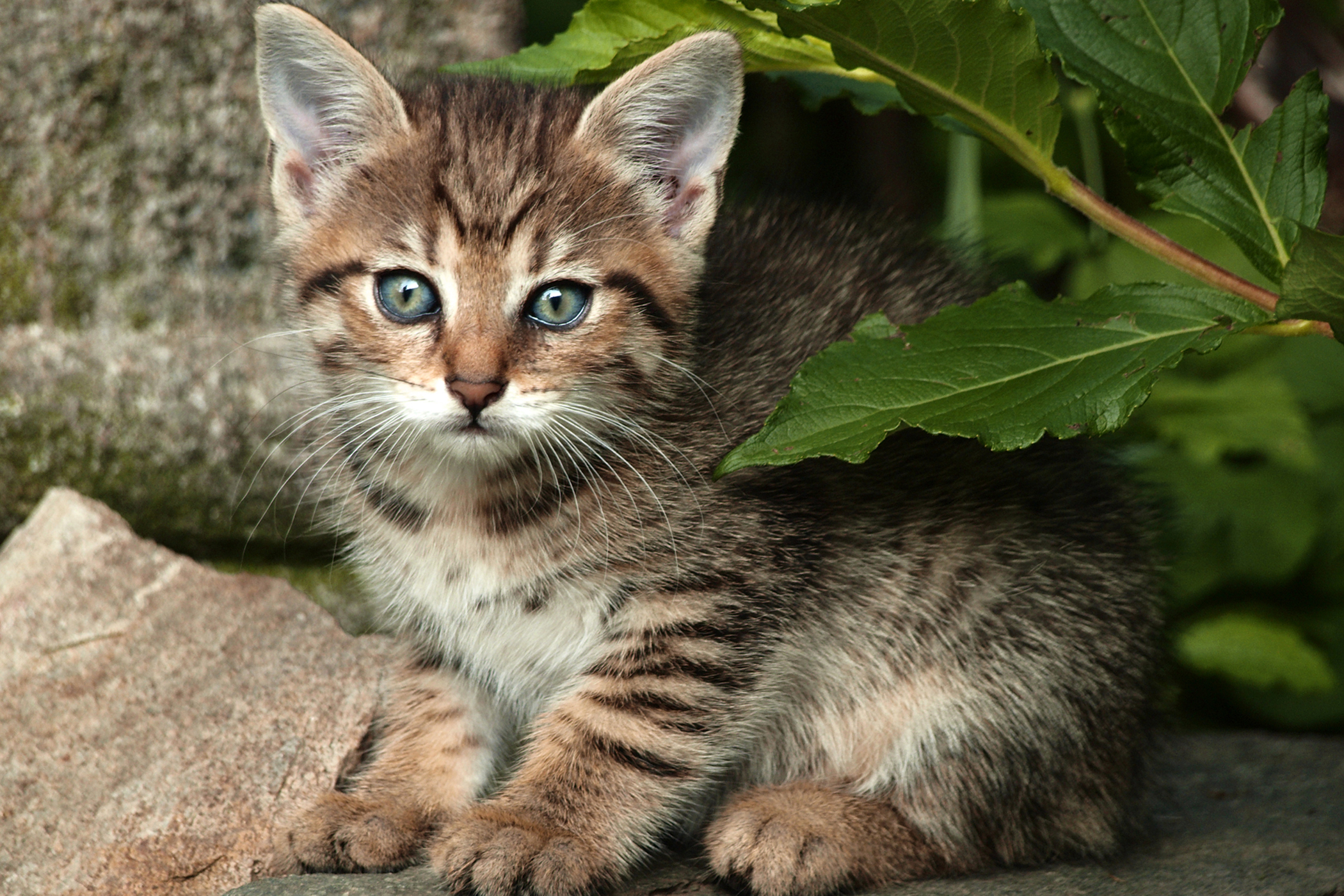 Red Dye Allergy in Cats