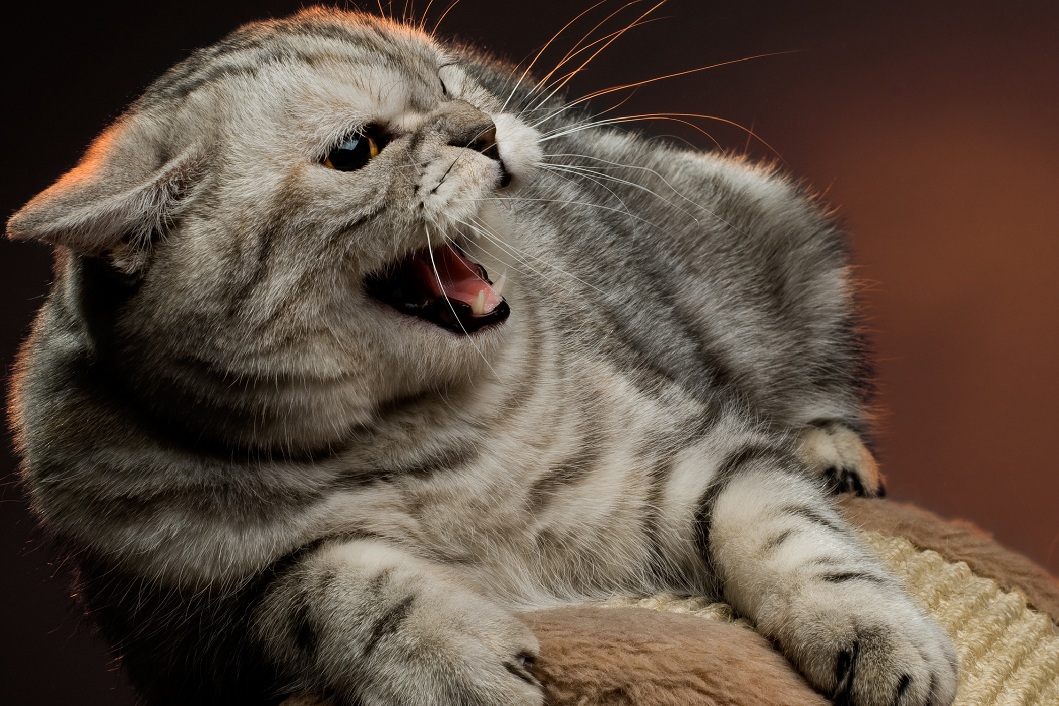 Rotavirus Infection in Cats