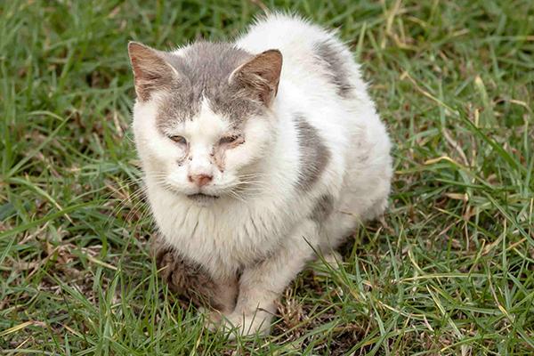 male tabby cat characteristics