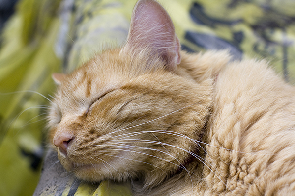 Salmonella Infection in Cats