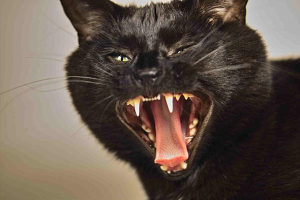 Seizures in Cats