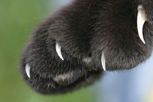 Skin and Toe Cancer in Cats