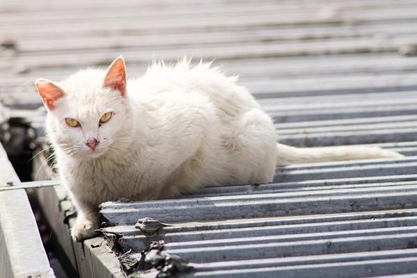 Soft Tissue Trauma in Cats
