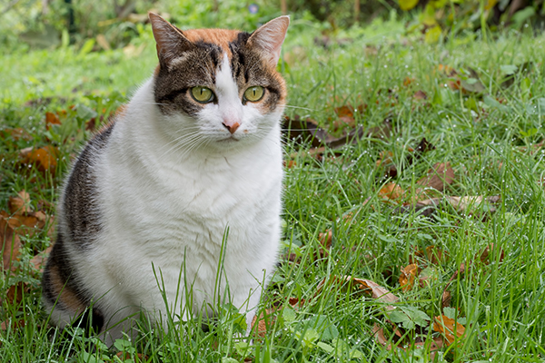 Sperm Abnormalities in Cats