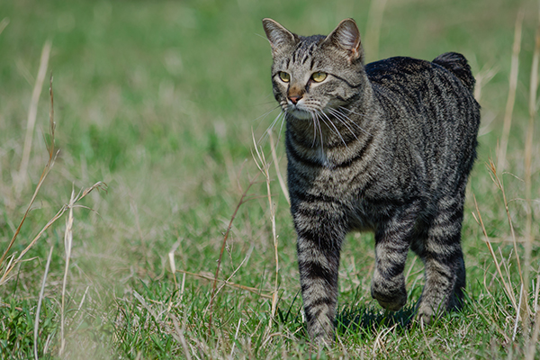 Spinal Cord Development Disorder in Cats