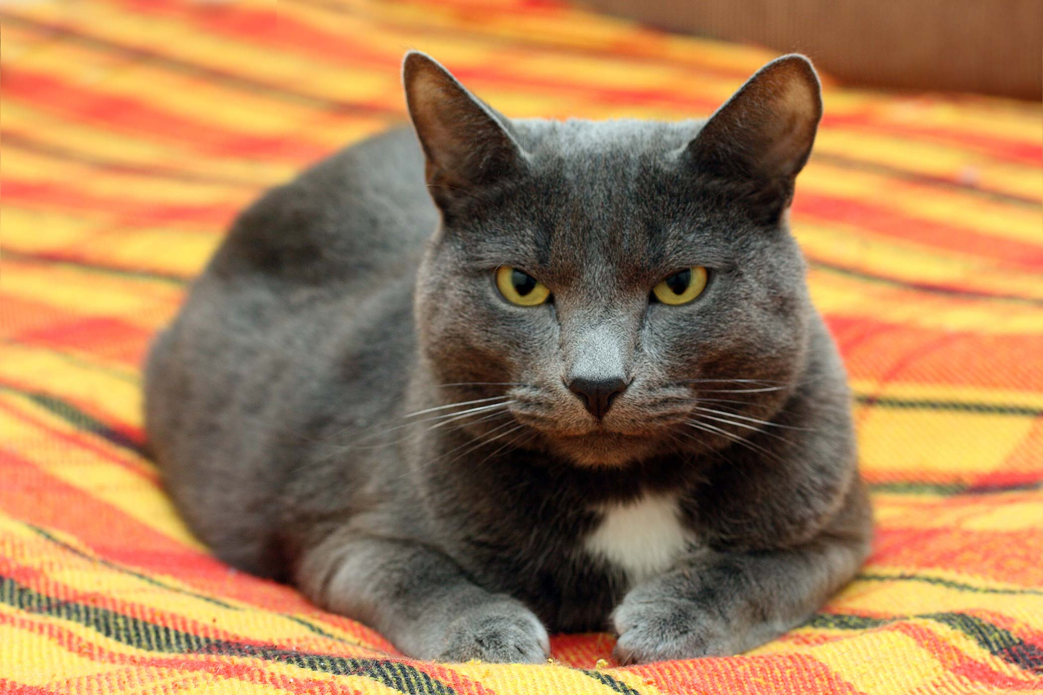 Spinal Cord Inflammation in Cats