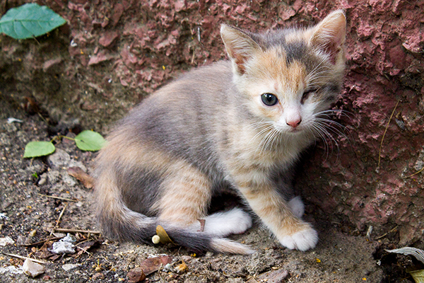 Spine Degeneration in Cats