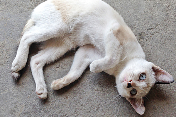 Stomach and Intestinal Cancer in Cats