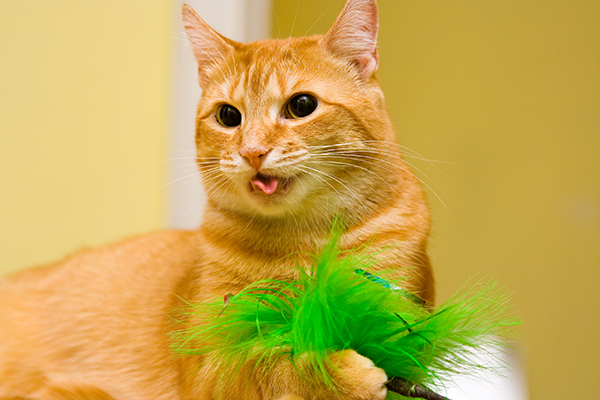 Swallowing Difficulties in Cats