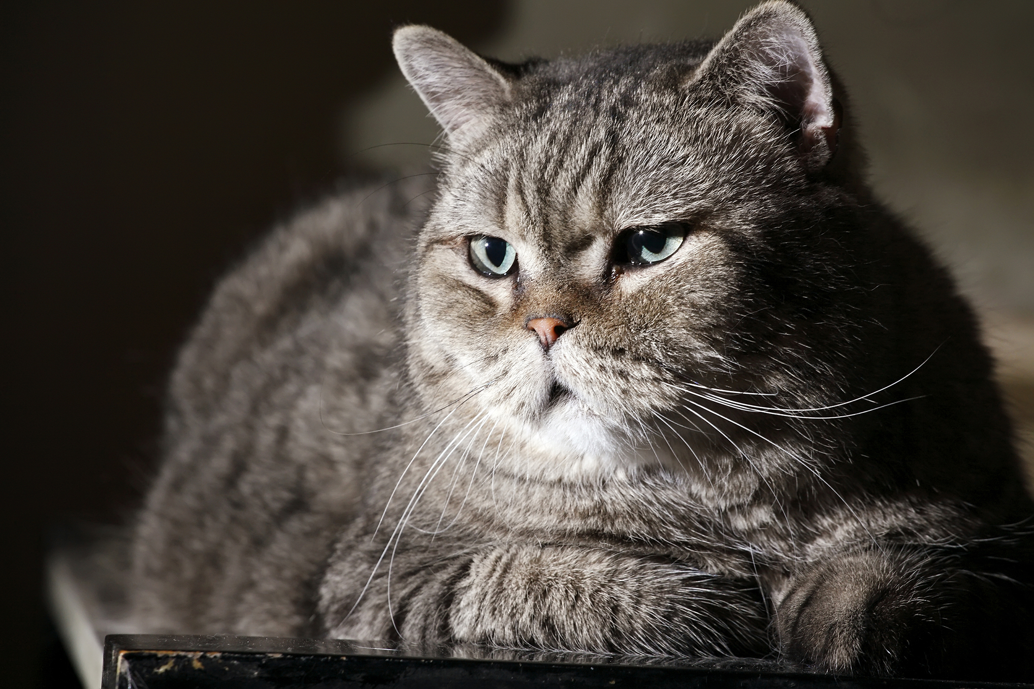 Termite Treatment Allergy in Cats
