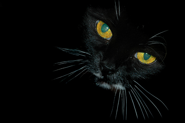 Tonsillitis in Cats